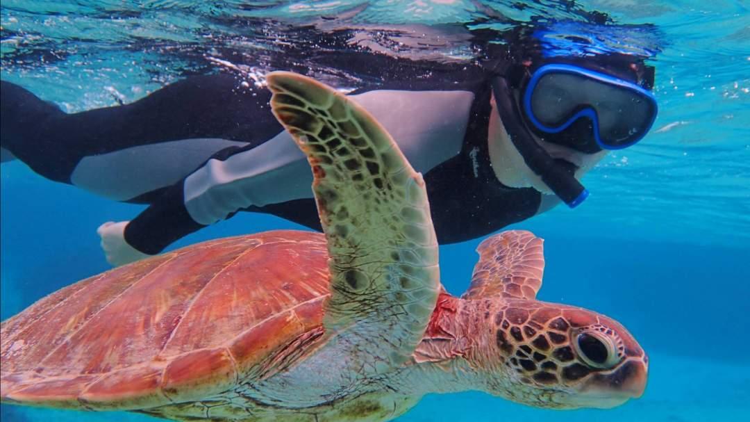 宮古島の海の中は、ペパーミントグリーンの光を放ち、竜宮の世界が目の前に広がります。カラフルなサンゴ、大小様々の魚と出会うことができます!ウミガメ遭遇率も高!