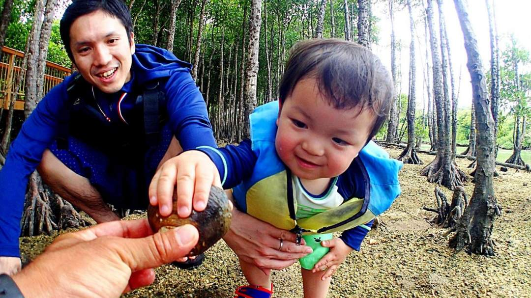 マングローブには、どんな生き物たちがすでいるかな!? どんな植物が生えているのかな? 面白い生物を探してみましょう!