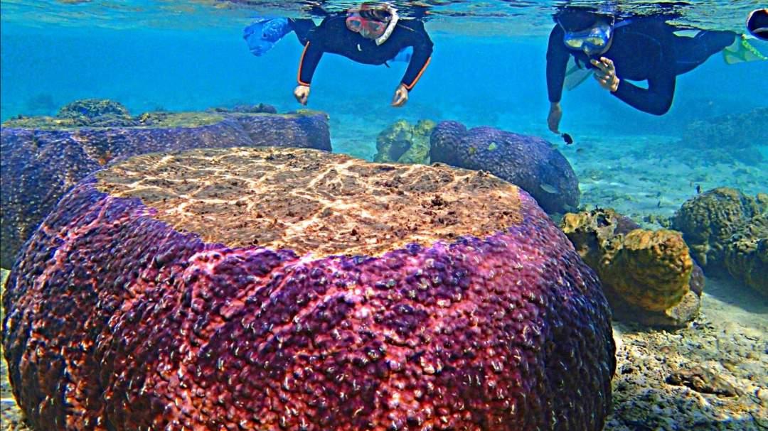巨大サンゴが迫力満点♪