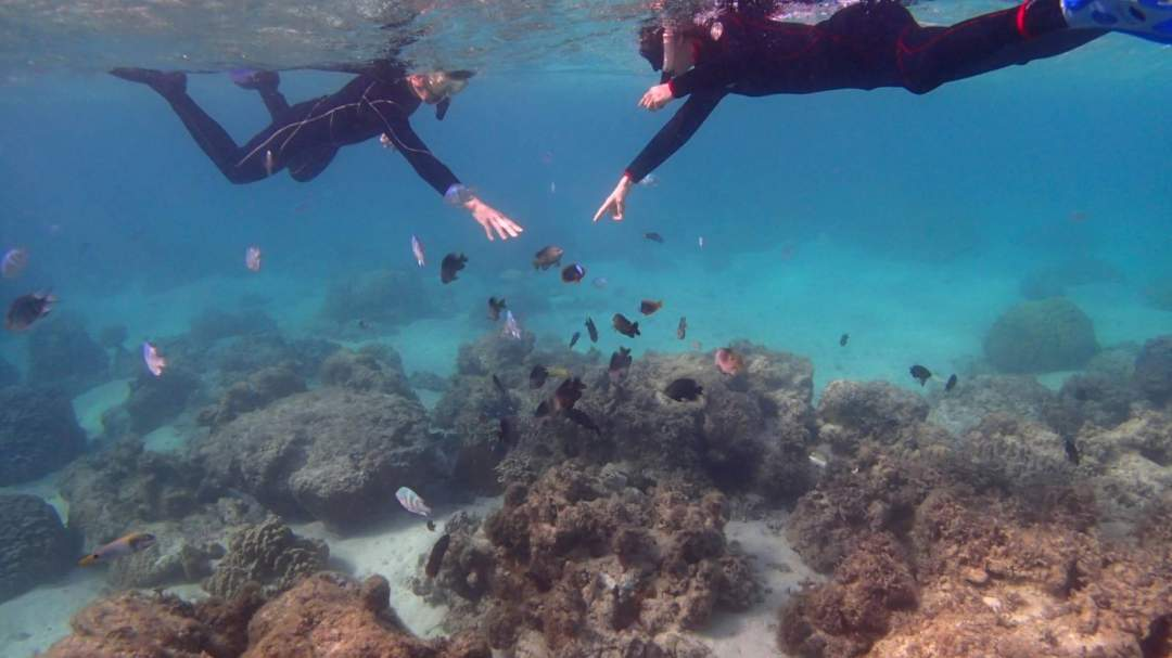 熱帯魚ももちろんたくさん見れちゃいます☆ この辺の海ではここでしか見れないカクレクマノミもいます! 可愛いカラフルなお魚たちと一緒にスイスイ泳ぎましょう!