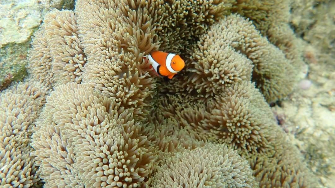 魚たちとの出会い! 美しい海には、たくさんの生き物たちが住んでいます。中でも魚たちの数と種類は圧巻!大きい魚、小さい魚、カラフルな魚、ユニークな姿形の魚…海の中の暮らしを覗いてみましょう!