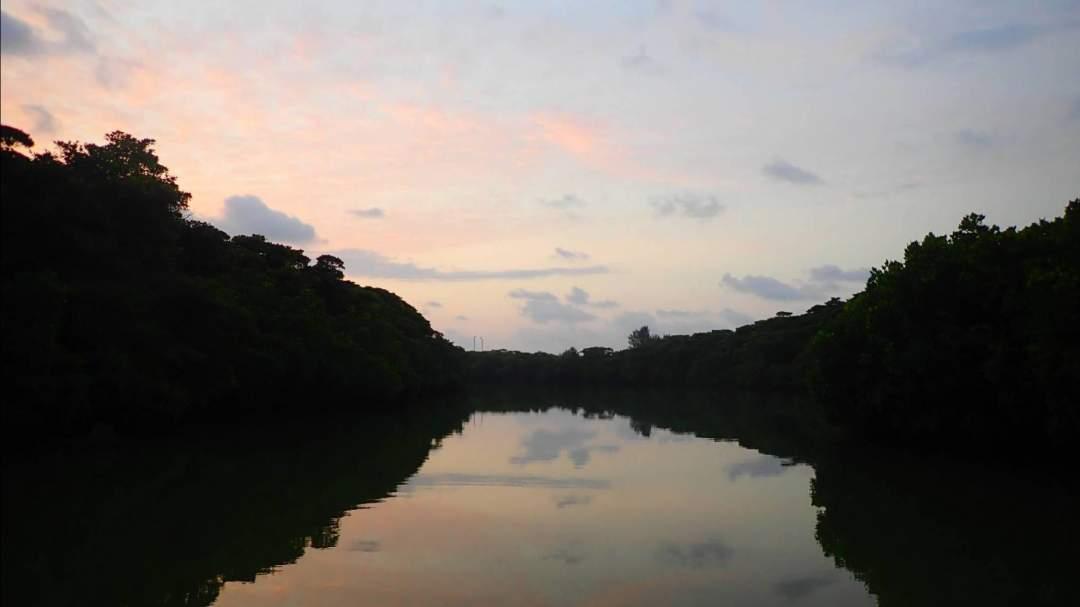 【フィールドは穏やかなマングローブ林】  早朝のマングローブ林はとっても静かで穏やか。  ピンと張りつめた独特の雰囲気は石垣島でしか味わえません!