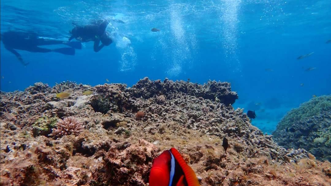 幻の島周辺の海でシュノーケリング体験 「浜島」周辺の海は『石西礁湖』と呼ばれており、西表石垣国立公園に指定された国内最大のサンゴ礁です!