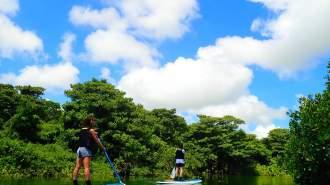 【沖縄・石垣島】【1日】天然記念物マングローブSUPorカヌー&青の洞窟シュノーケリング【写真データ無料】