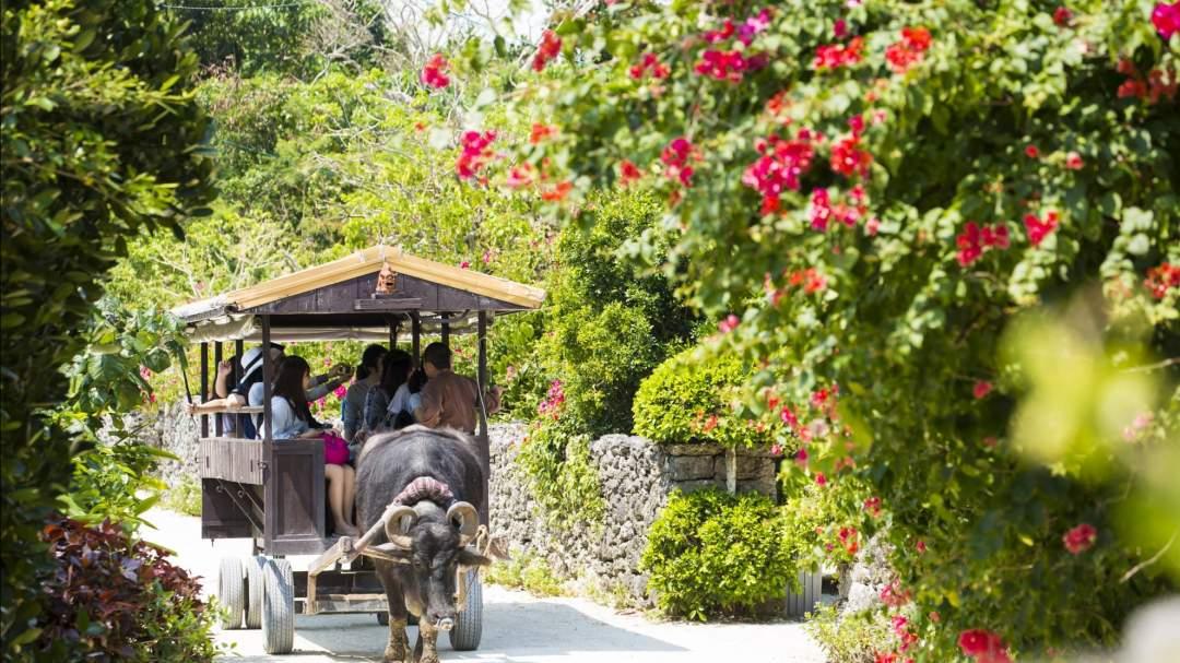 竹富島での~んびり観光! 石垣島観光にいらっしゃる方のほとんどが訪れる人気の離島、竹富島。赤瓦屋根や石垣造りの家屋が並ぶ、原風景あふれる集落をゆっくり観光。水牛車に揺られて集落をまったり巡るのもアリ!