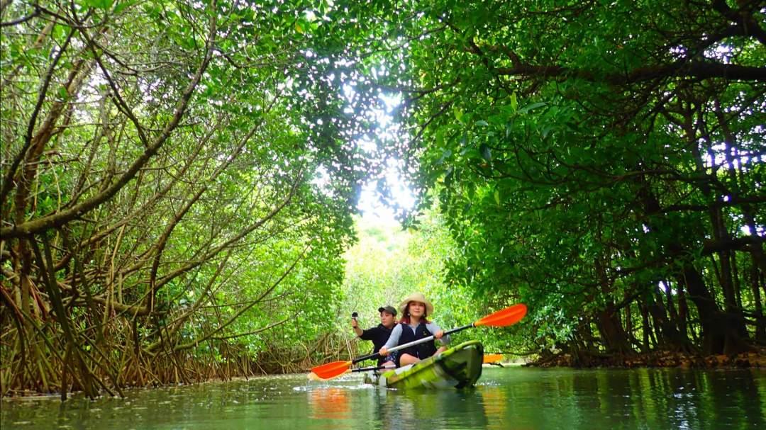 天然記念物のマングローブ林でSUP/カヌー体験! 石垣島の魅力は海だけではありません!亜熱帯ならではのマングローブが生い茂る穏やかな川も石垣島の人気スポット。フィールドとなる「宮良川のヒルギ林」は国の天然記念物に指定されています。