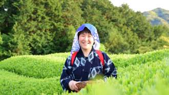 静岡の絶景でお茶摘み体験