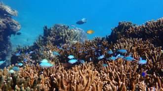 【沖縄・宮古島】自然の水族館!色とりどりの魚たちと泳ぐトロピカルシュノーケリング【写真データ無料】