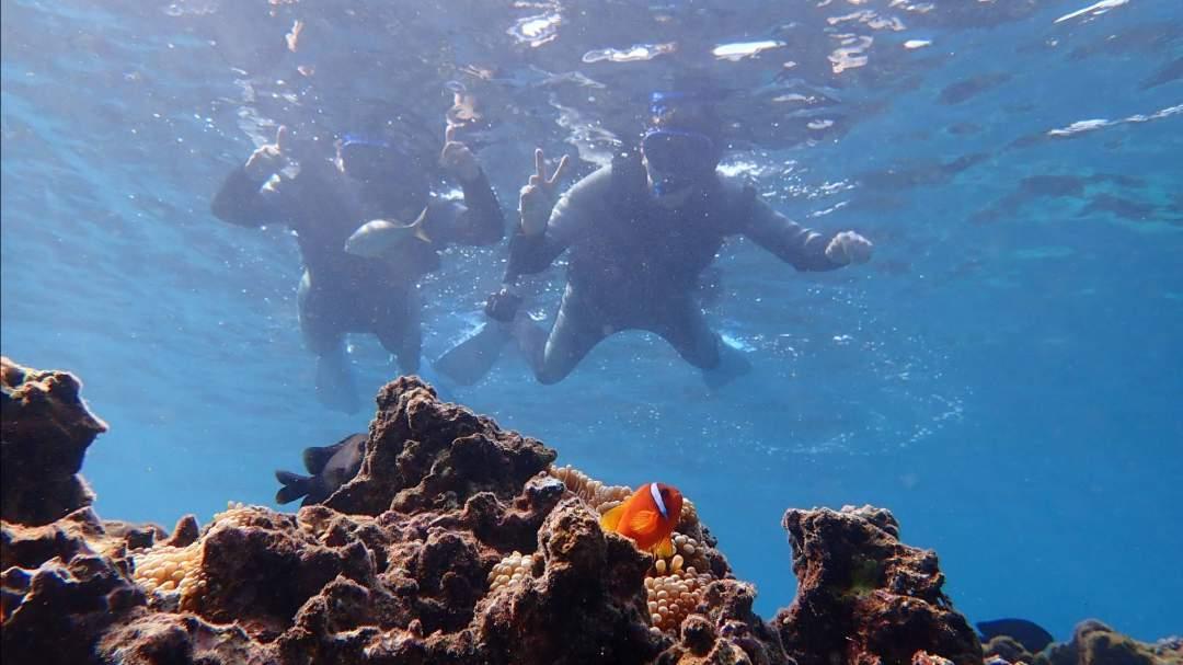 カラフルな魚やサンゴ! 宮古島の海はまるで、天然の水族館!大きい魚、小さい魚、カラフルな魚、ユニークな姿形の魚…海の中の暮らしを覗いてみましょう!