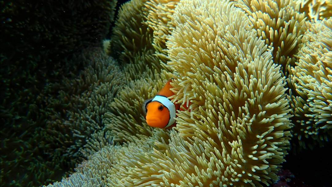 まるで天然の水族館!宮古島の絶景ビーチ! 宮古島の海の中は、ペパーミントグリーンの光を放ち、竜宮の世界が目の前に広がります。カラフルなサンゴ、大小様々の魚と出会うことができます!