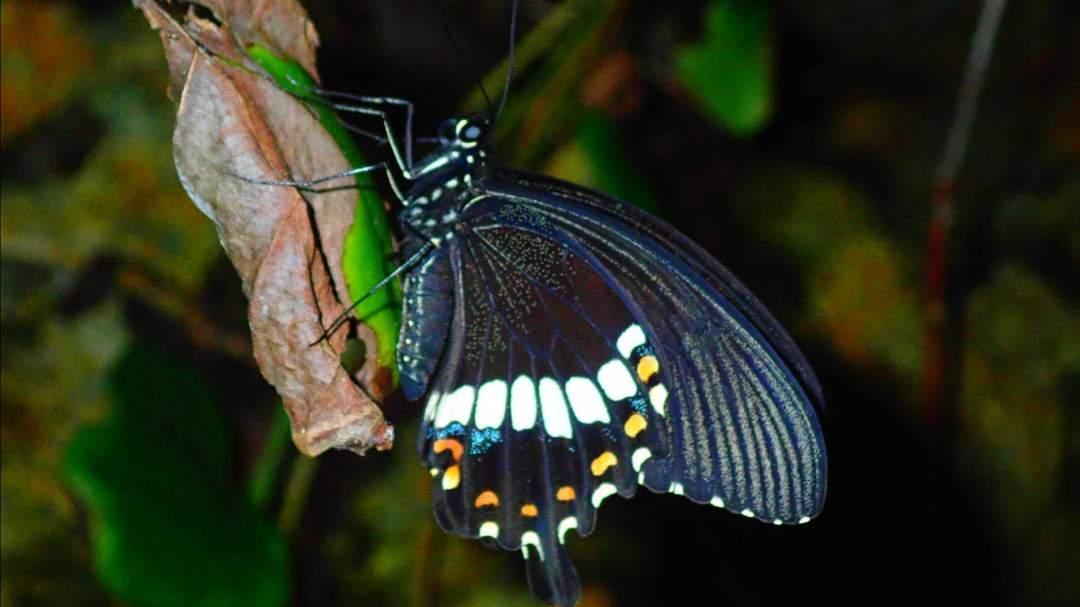 宮古島特有の生き物たち 亜熱帯気候帯に属する宮古島には独自の生態系が広がっています。亜熱帯特有の動植物を探しに行きましょう!