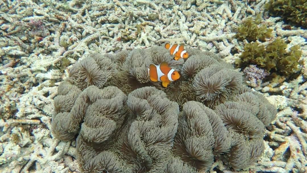 たくさんの魚達! 星砂の浜には数えきれない種類の魚たちが泳いでいます。さて、何種類の魚を見つけられるでしょうか?