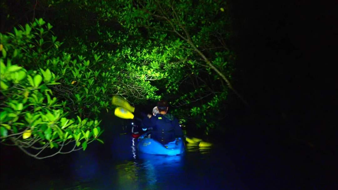 独特の雰囲気!夜のマングローブ 夜のマングローブ林をカヌーで満喫したいただきます!昼間では味わえない独特な世界観の中でのクルージング体験!