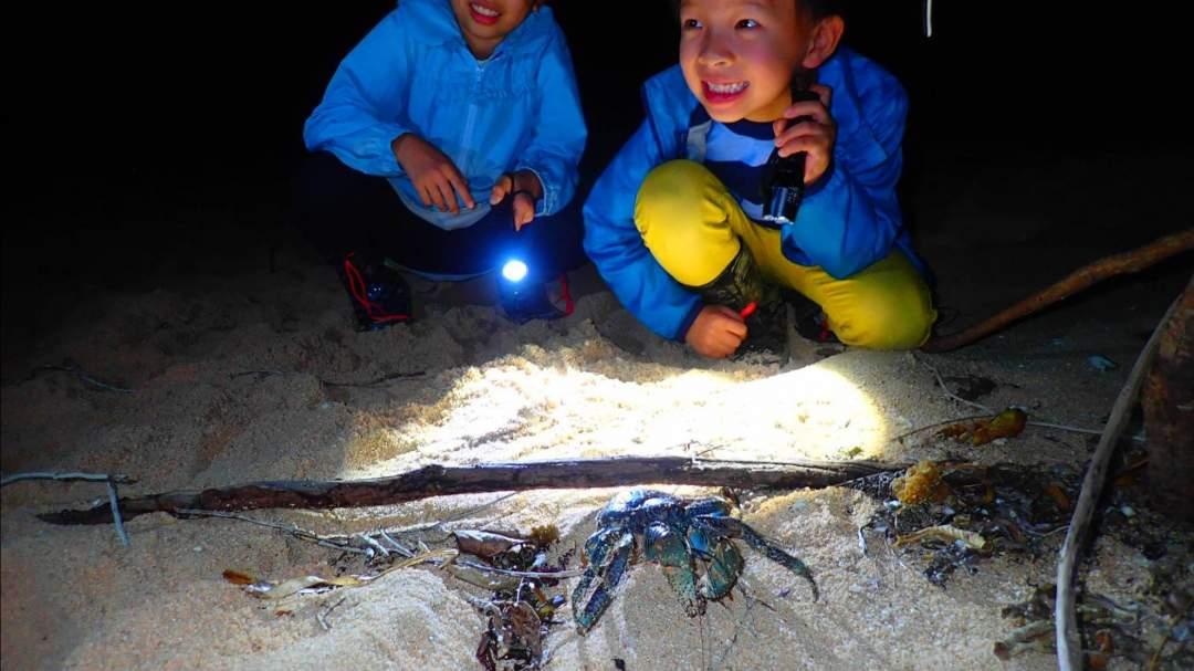 お子様にも大人気! 西表島の夜は、ここでしか出会ない生き物がたくさん!興奮間違いなし!
