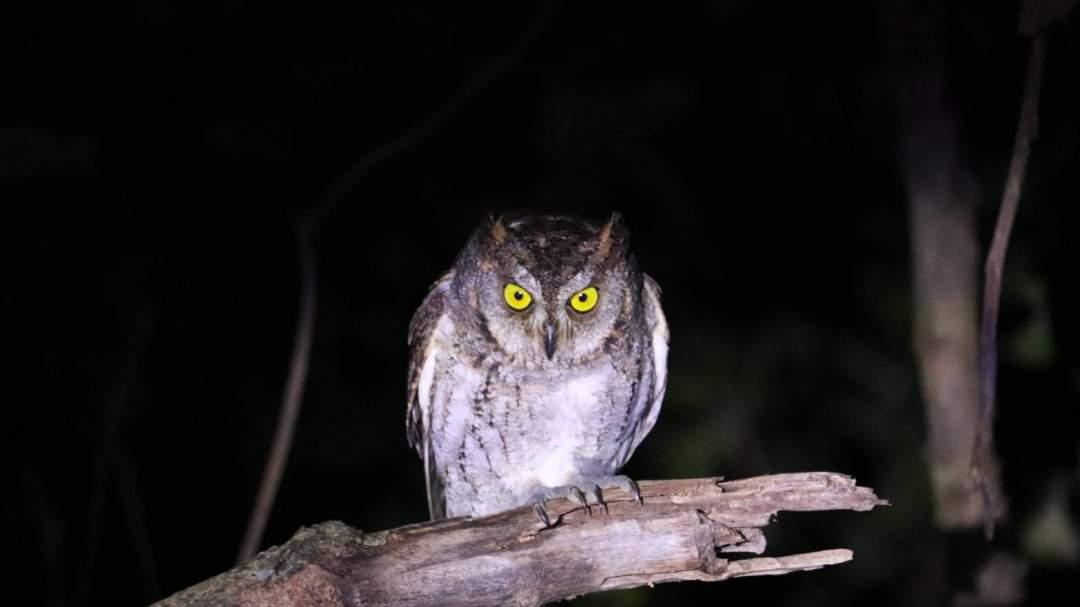 亜熱帯ならではの生き物! 亜熱帯気候帯に属する西表島には独自の生態系が広がっています。亜熱帯特有の動植物を探しに行きましょう!