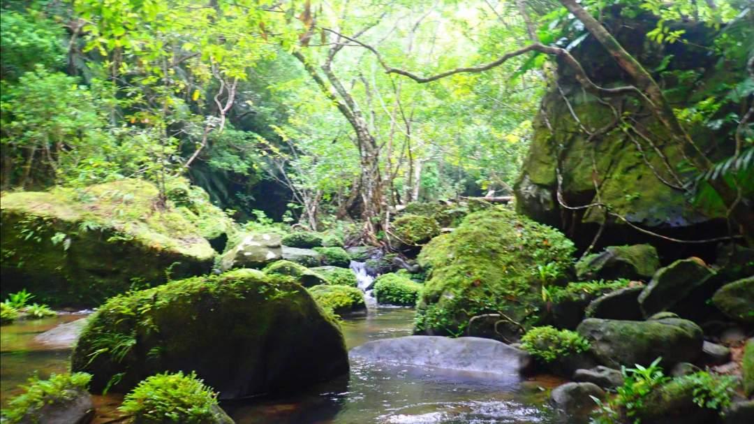 まるで異世界体験! マングローブ林の中はまるで異世界。「本当に日本?」と疑いたくなる本格的なジャングルを手軽に体験できます。