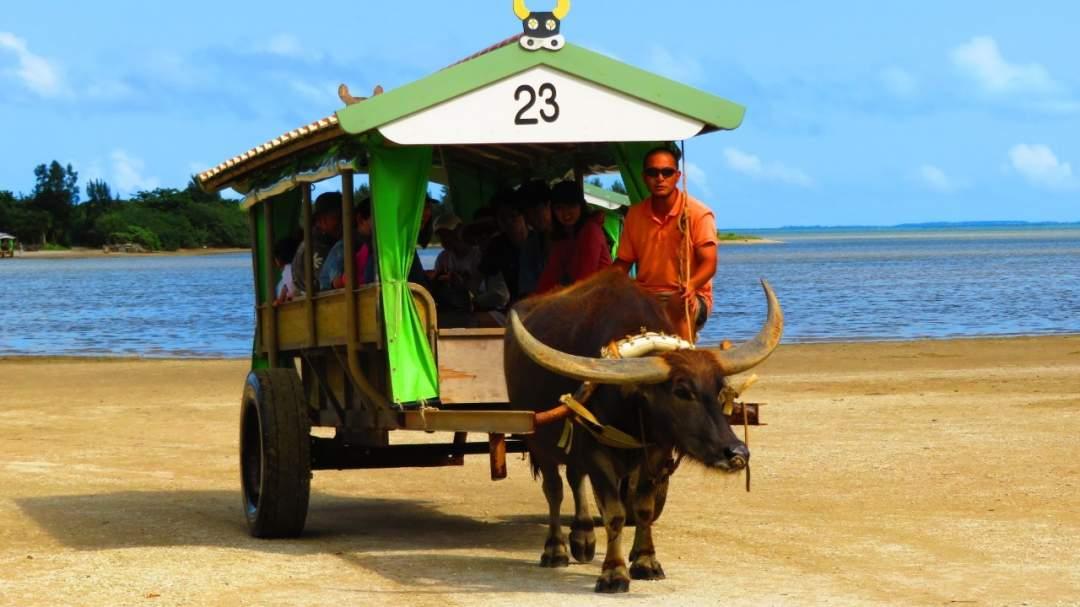 アクティビティと観光、両方楽しめる! 大人気ピナイサーラの滝カヌーと西表島から水牛車で15分の離島「由布島」の観光  1度でアクティビティも観光も楽しめます!