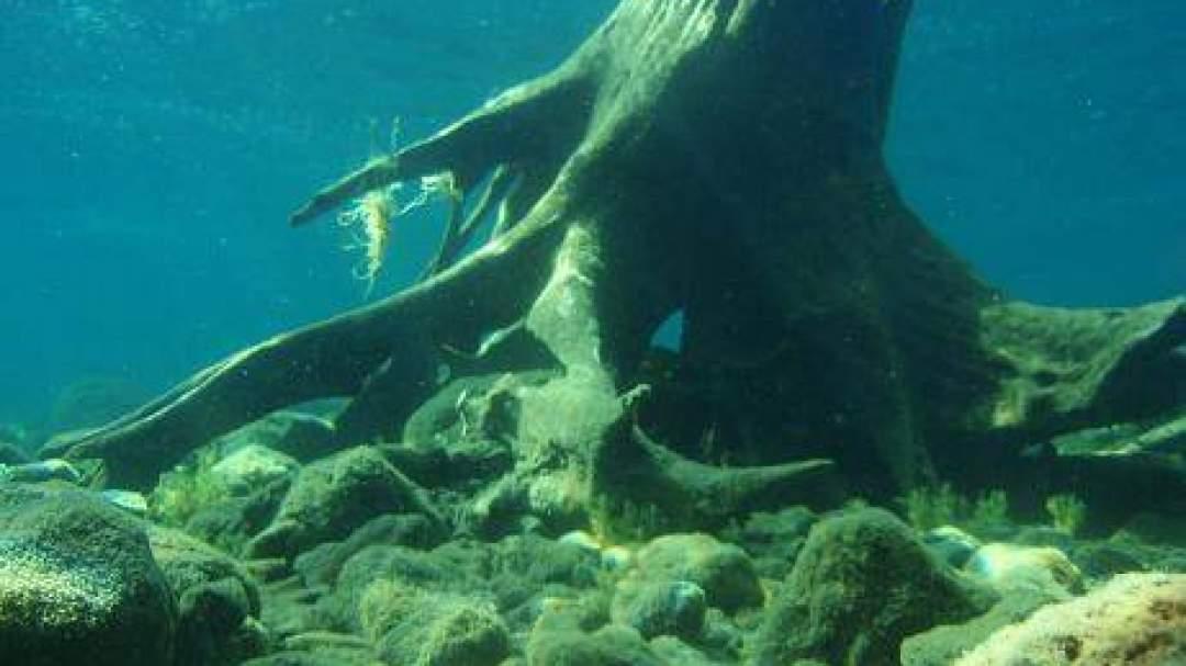 水中にたたずむ古底木.