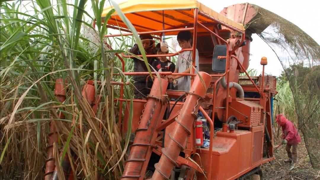 1-3月のサトウキビ収穫シーズンはハーベスターの操縦体感ができるかも?