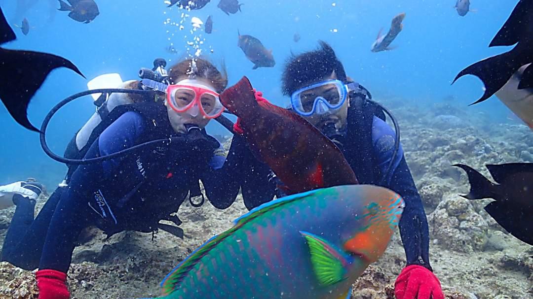 色とりどりのカラフルな熱帯魚が沢山海の中を泳いでいます! 魚との距離は、ほんとにすぐそこ! 迫力満点の海の中の世界をお楽しみください!