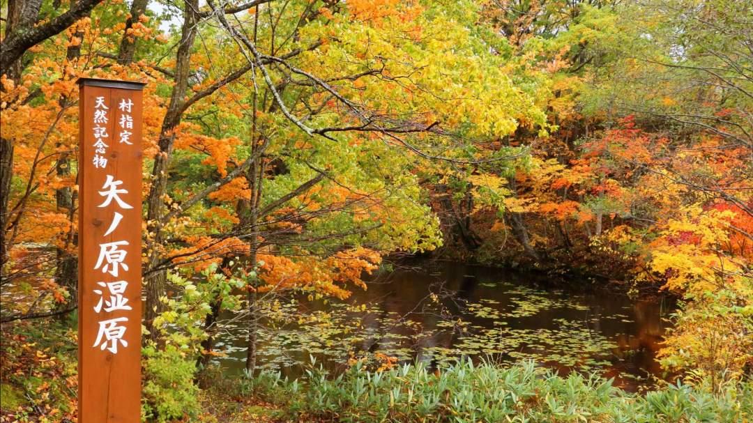 「矢ノ原湿原」 ミズナラ、ヤマウルシ、モミジなどの紅葉が、 湿原の水面に映り込む様が撮影できます。