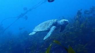都心から2時間!千葉の海で体験ダイビング!