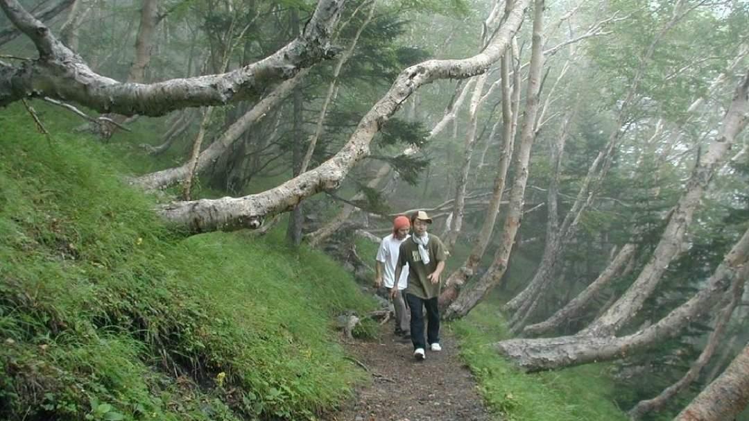 ★帰りは森林限界の遊歩道の中を高山植物を見ながら帰ってきます。