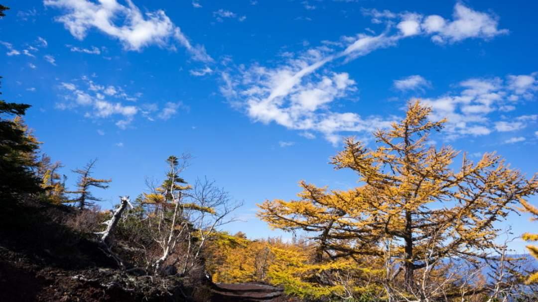 ★9月10月は空気も晴れ、黄金色のカラマツの紅葉が見事。