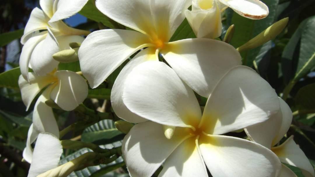 癒しのハワイアンミュージックが気持ちいい♪