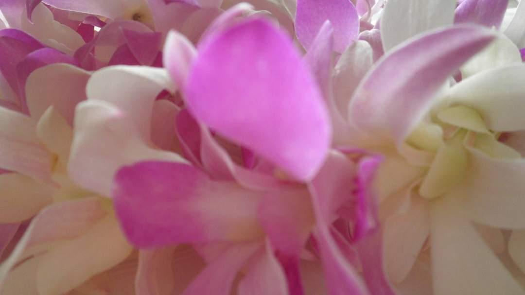 甘い香りの花々をイメージして優しい気持ちに♡
