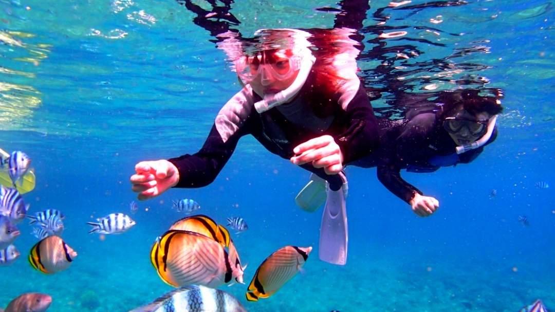 洞窟の外には熱帯魚がたくさん! カラフルなサンゴ礁に色とりどりの熱帯魚たち! お魚たちと一緒に沖縄の海をゆったり泳ぎましょう!