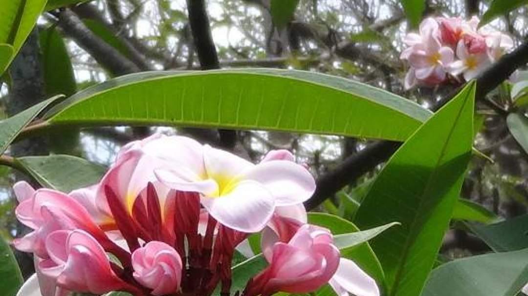 甘い香りの花々をイメージしてうっとり!
