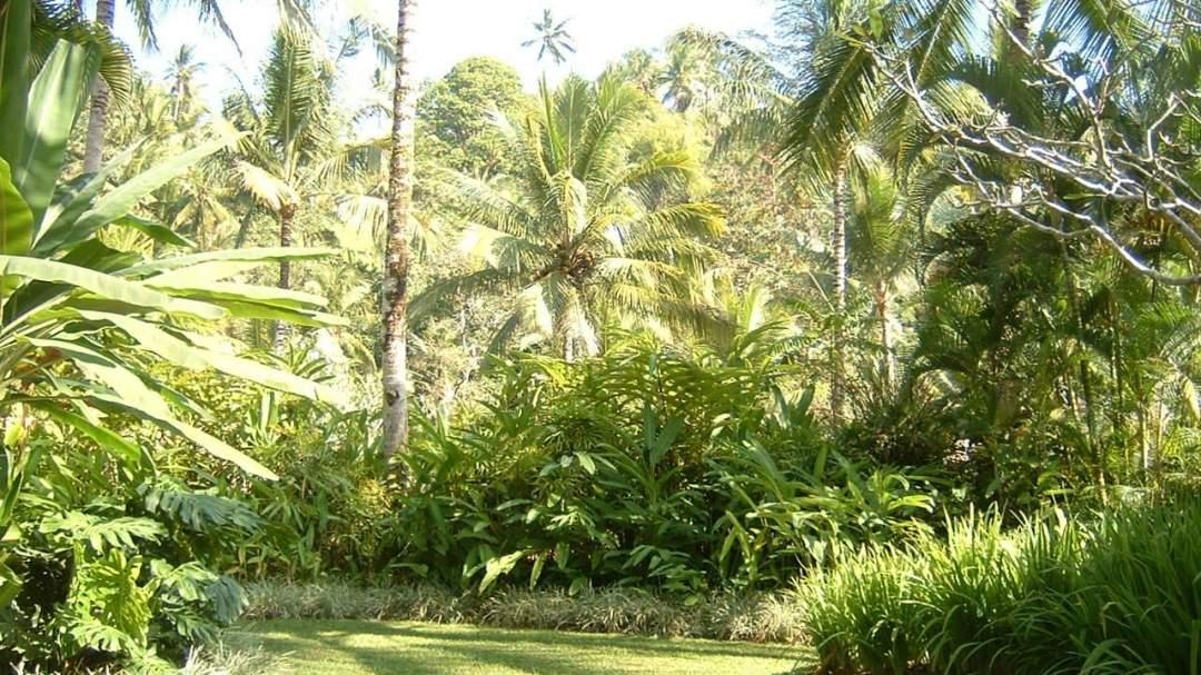 大好きなハワイの美しい風景を思い浮かべて!