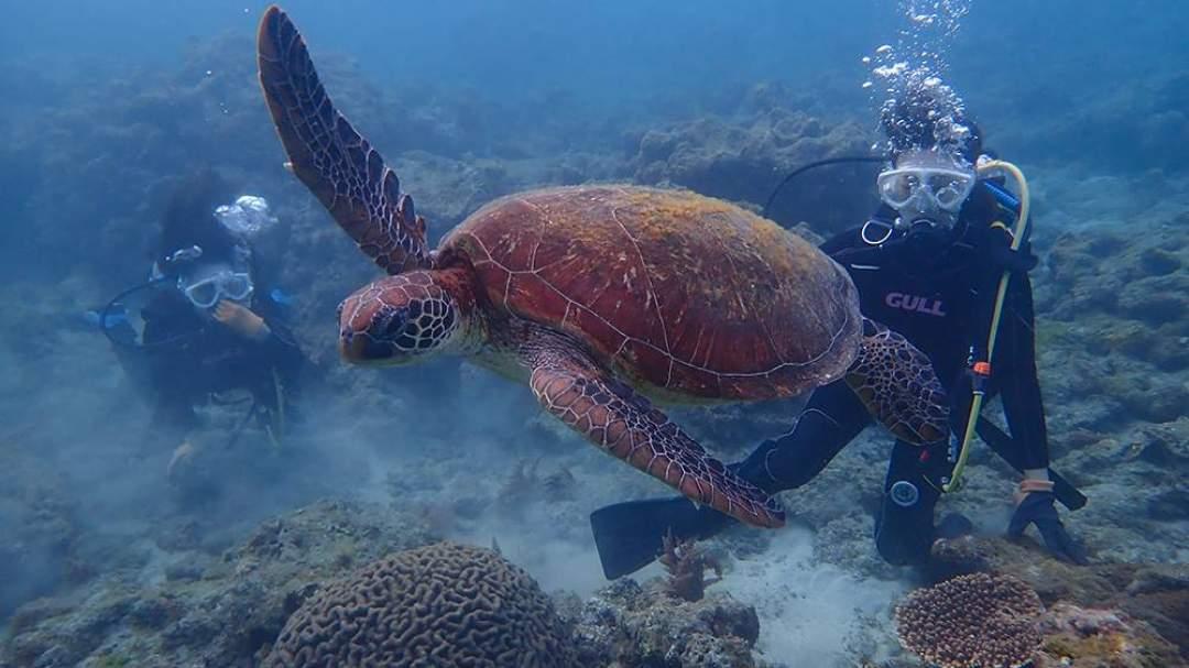 屋久島は世界的にも有名な「ウミガメの島」。ぜひ屋久島の海でウミガメたちと一緒に癒やしの時間をお過ごしください!