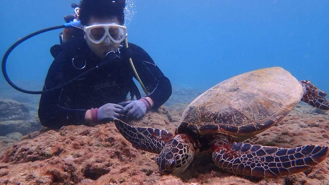 青く澄んだ屋久島の海は豊かな生態系を育み、様々な生き物たちが平和に暮らす豊かな楽園を作り上げています。そんな美しい屋久島の海を覗いてみよう!