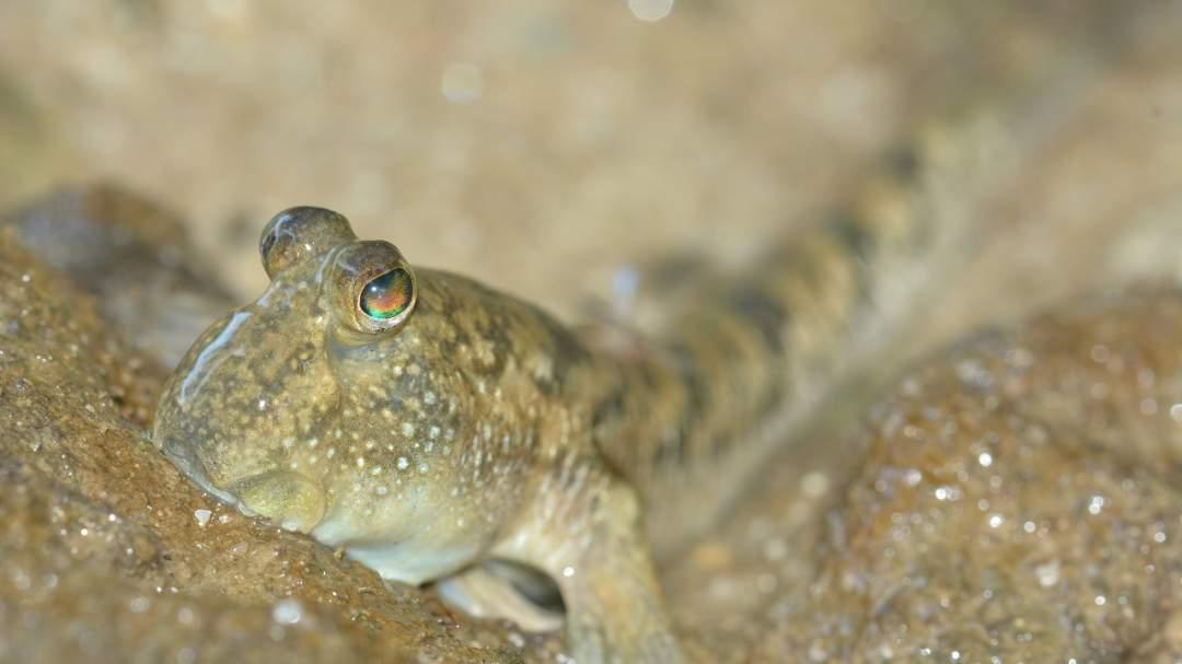 亜熱帯沖縄の動植物を観察。ガイドが詳しく説明します!