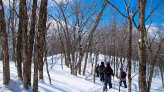 【要予約】檜枝岐の雪山を歩こう!絶景をのぞむスノーシューツアー!