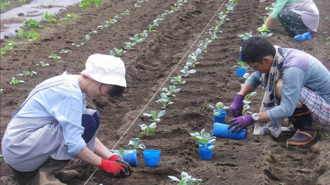 2010年よりひふみ農園はオープンしましたが、そのころからボランティアの皆さんに、農作業をお手伝いいただいています。