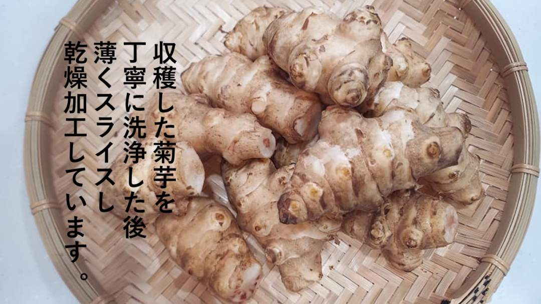 収穫した菊芋を丁寧に洗浄しスライスします。 乾燥したのちチップ状態の物を粉末加工します。