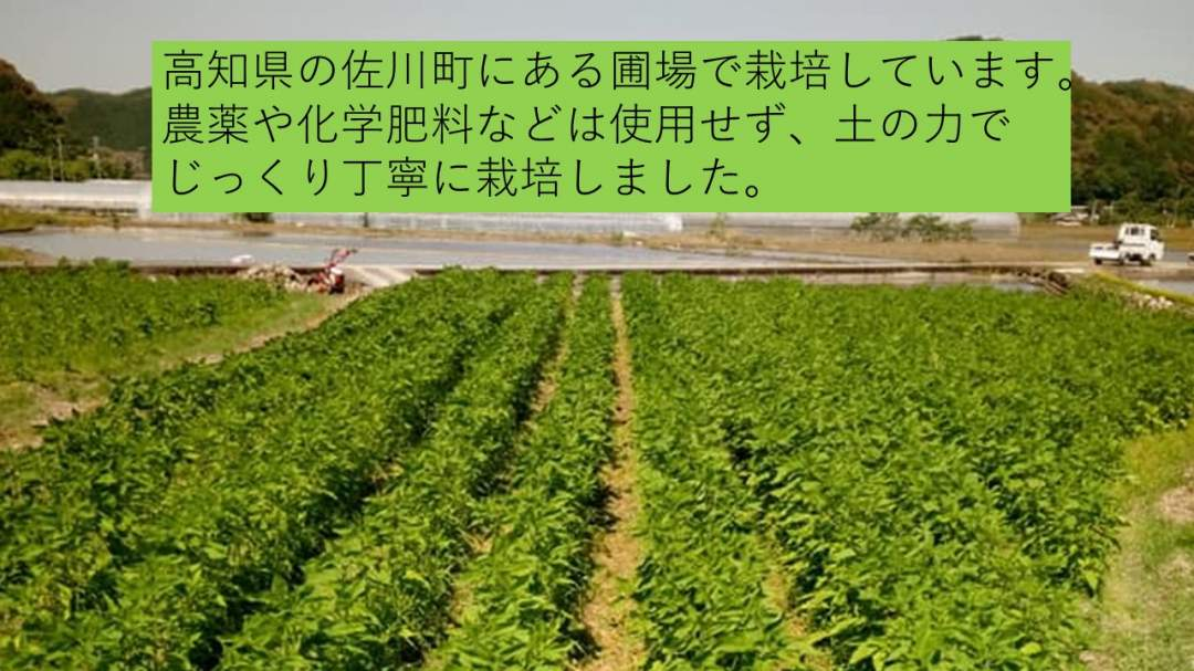高知県の山間部、佐川町で栽培しています。 ・農薬不使用 ・化学肥料不使用 ・除草剤不使用