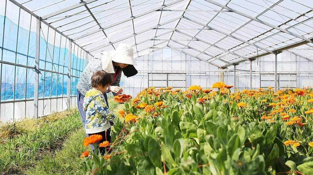 美しいオレンジ色のカレンデュラ畑を未来につなげたい。