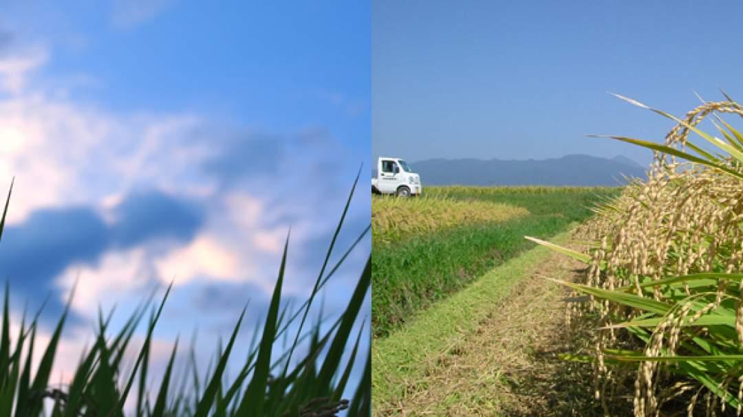 夏場、昼夜の気温差が激しいほど美味しい米になると言われています。 会津盆地に位置する坂下町は日中と夜間の気温差が大きい盆地特有の気象条件にあるため、お米が美味しくなるのです。