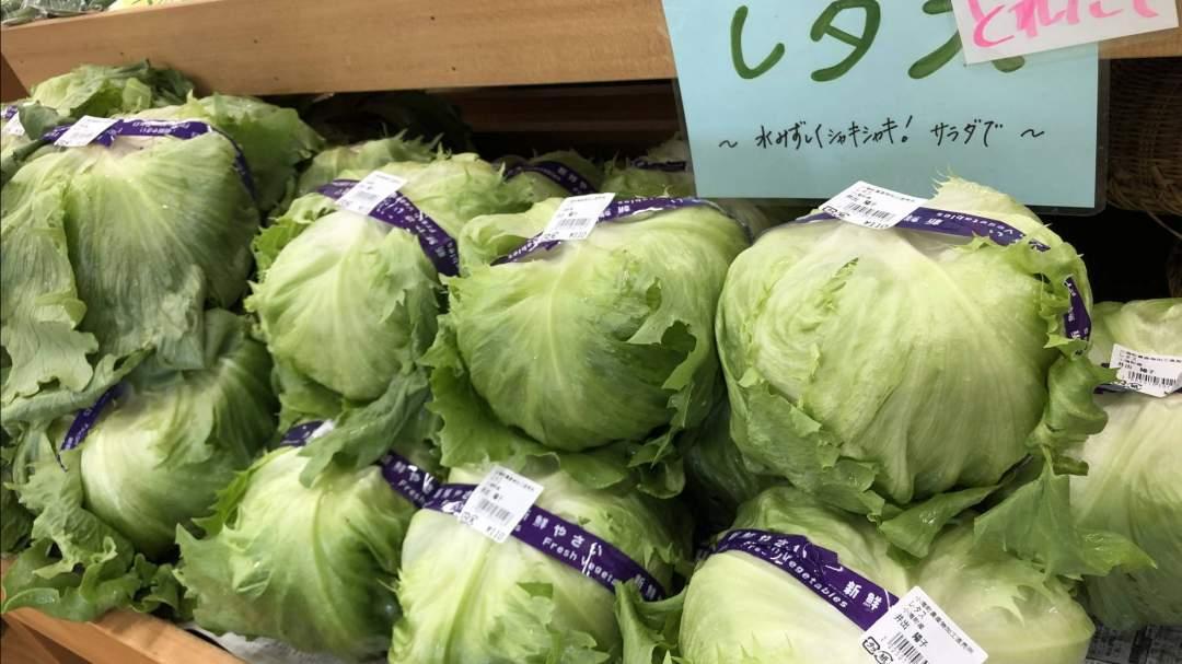 レタス、トマト、きゅうり、ナスなど、お馴染みのお野菜が勢揃いです。